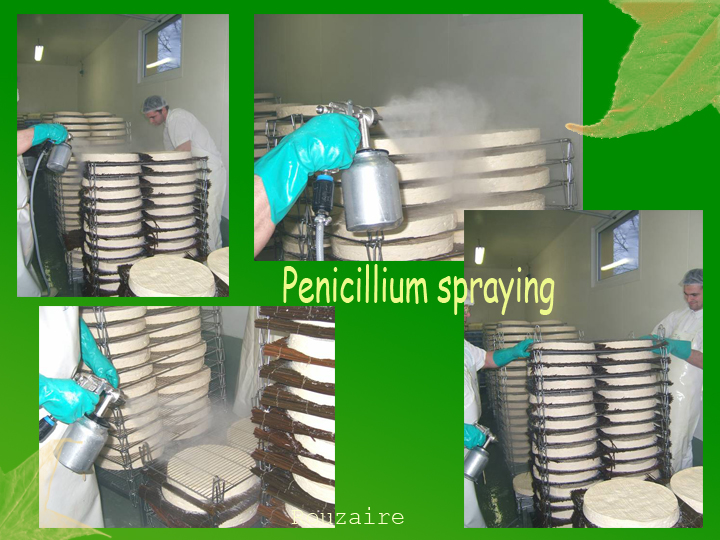 penicilium spraying